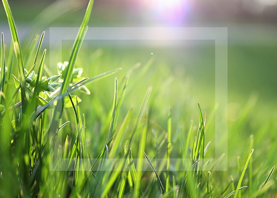 Galvans Lawn and Landscape image